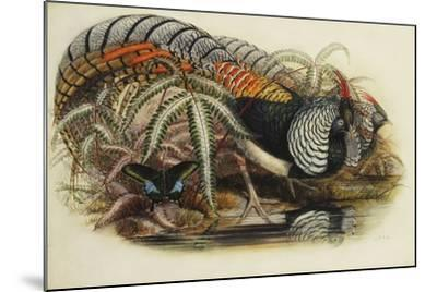 Lady Amherst's Pheasant-Henry Constantine Richter-Mounted Giclee Print