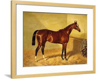 Orlando, a Bay Racehorse in a Loosebox, 1845-John Frederick Herring I-Framed Giclee Print