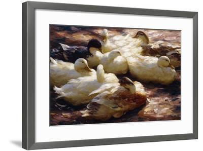 Ducks on a Riverbank-Alexander Koester-Framed Giclee Print