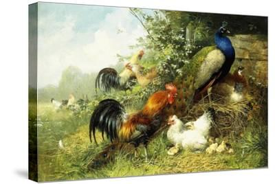 Fowl and Peacocks, 1899-Arthur Fitzwilliam Tait-Stretched Canvas Print
