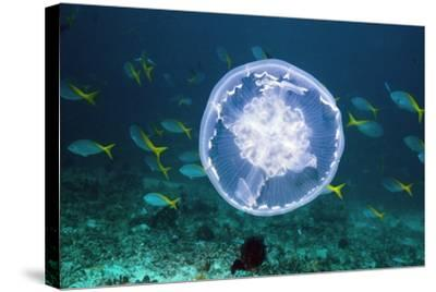 Fish And Jellyfish Over a Coral Reef-Georgette Douwma-Stretched Canvas Print