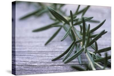 Rosemary-Maxine Adcock-Stretched Canvas Print