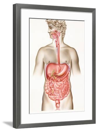 Digestive System-John Bavosi-Framed Premium Photographic Print