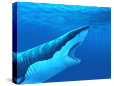 Great White Shark-Chris Butler-Stretched Canvas Print