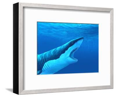 Great White Shark-Chris Butler-Framed Premium Photographic Print