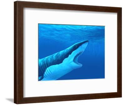 Great White Shark-Chris Butler-Framed Premium Photographic Print