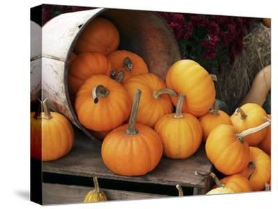 Harvested Pumpkins-Tony Craddock-Stretched Canvas Print