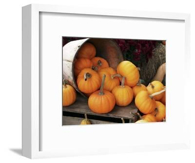 Harvested Pumpkins-Tony Craddock-Framed Premium Photographic Print