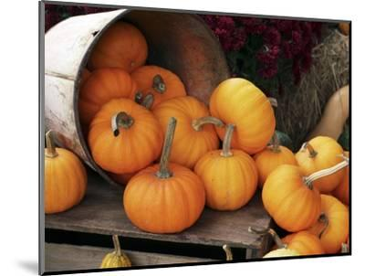 Harvested Pumpkins-Tony Craddock-Mounted Premium Photographic Print