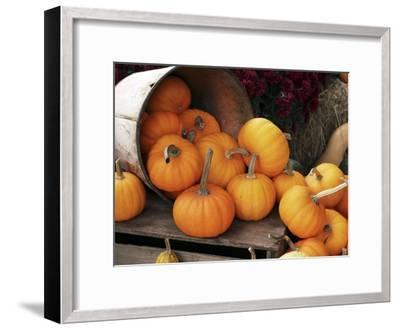 Harvested Pumpkins-Tony Craddock-Framed Premium Photographic Print