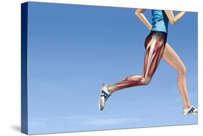 Leg Muscles In Running, Artwork-Henning Dalhoff-Stretched Canvas Print