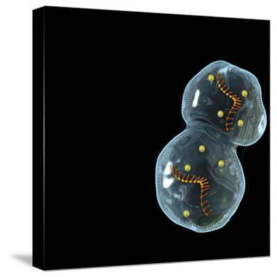 Protocell Proliferation, Artwork-Henning Dalhoff-Stretched Canvas Print
