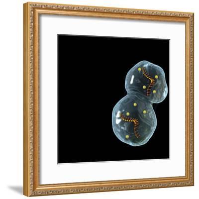 Protocell Proliferation, Artwork-Henning Dalhoff-Framed Premium Photographic Print