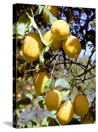 Lemons-Victor De Schwanberg-Stretched Canvas Print