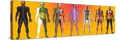 Human Anatomy ,artwork-Mehau Kulyk-Stretched Canvas Print