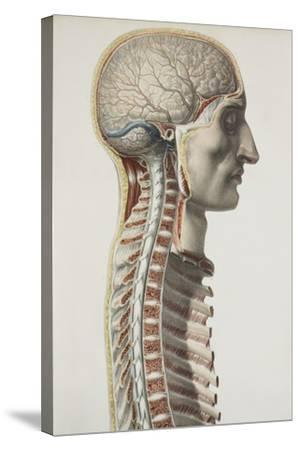 Brain And Spinal Cord, 1844 Artwork-Science Photo Library-Stretched Canvas Print