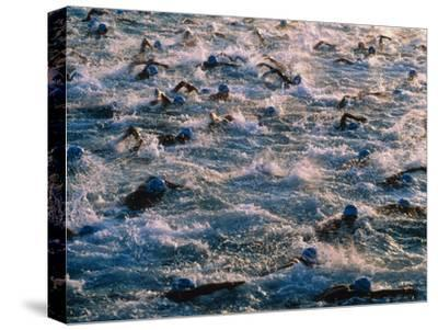 Triathlon Swimmers-Brad Lewis-Stretched Canvas Print