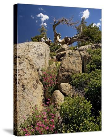 Granite Outcrop-Bob Gibbons-Stretched Canvas Print