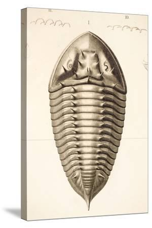 1846 Fine Victorian Trilobite Lithograph-Paul Stewart-Stretched Canvas Print