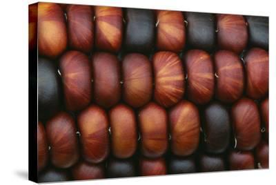 Sweetcorn Grains-Kaj Svensson-Stretched Canvas Print