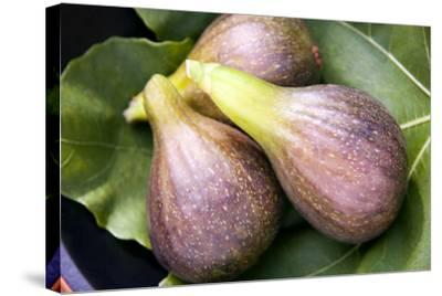 Brown Turkey Figs-Sheila Terry-Stretched Canvas Print