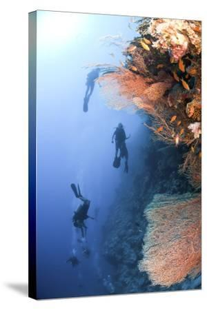 Coral Reef Red Sea, Ras Mohammed--Stretched Canvas Print