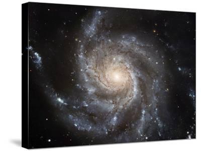 Spiral Galaxy M101--Stretched Canvas Print