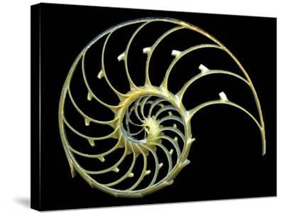 Sectioned Shell of a Nautilus-PASIEKA-Stretched Canvas Print
