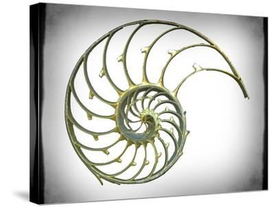 Sectioned Shell of a Nautilus, Artwork-PASIEKA-Stretched Canvas Print