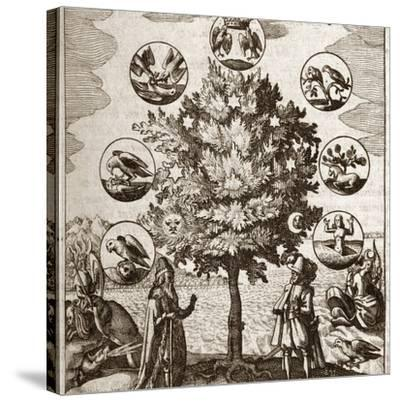 Alchemical Tree, Philosophia Reformata-Middle Temple Library-Stretched Canvas Print