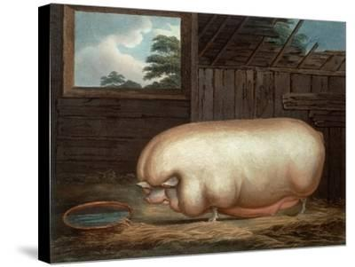"""""""This Remarkable Animal..."""", Engraved by John Whessel (C.1760-1823), 1808-Benjamin Gale-Stretched Canvas Print"""