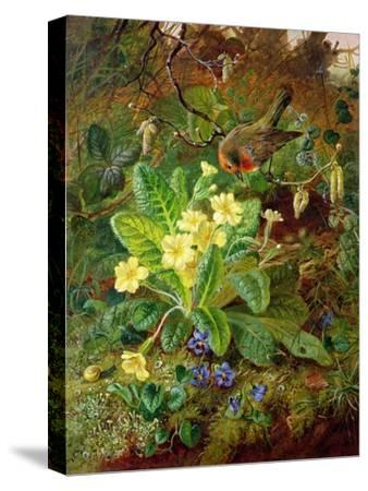 Primrose and Robin-William John Wainwright-Stretched Canvas Print