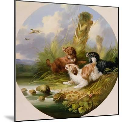 Three Spaniels Flushing Mallard-George Armfield-Mounted Giclee Print