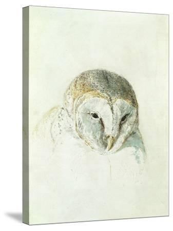 White Barn Owl, from the Farnley Book of Birds, C.1816-J^ M^ W^ Turner-Stretched Canvas Print