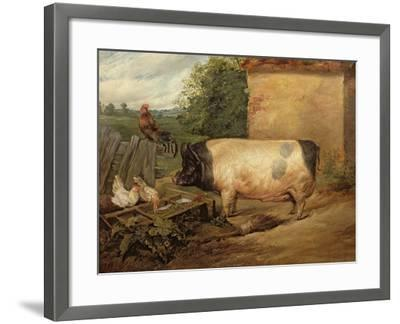 Portrait of a Prize Pig, Property of Squire Weston of Essex, 1810-Edwin Henry Landseer-Framed Giclee Print