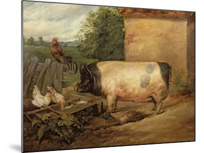 Portrait of a Prize Pig, Property of Squire Weston of Essex, 1810-Edwin Henry Landseer-Mounted Giclee Print