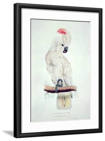 Salmon-Crested Cockatoo-Edward Lear-Framed Giclee Print