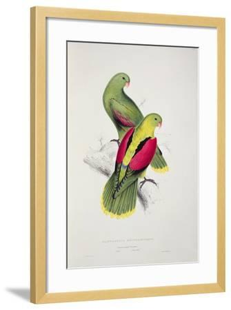 Crimson-Winged Parakeet-Edward Lear-Framed Giclee Print