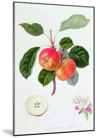 The Trumpington Apple, 1819-William Hooker-Mounted Giclee Print