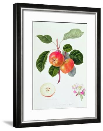 The Trumpington Apple, 1819-William Hooker-Framed Giclee Print