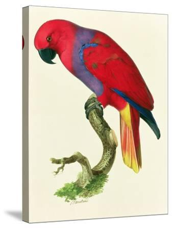 Red Parrot-Jacques Barraband-Stretched Canvas Print