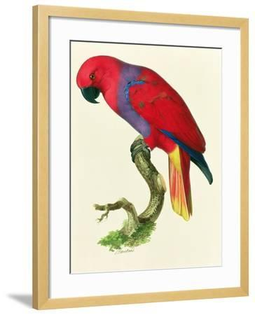 Red Parrot-Jacques Barraband-Framed Giclee Print