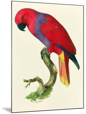 Red Parrot-Jacques Barraband-Mounted Giclee Print
