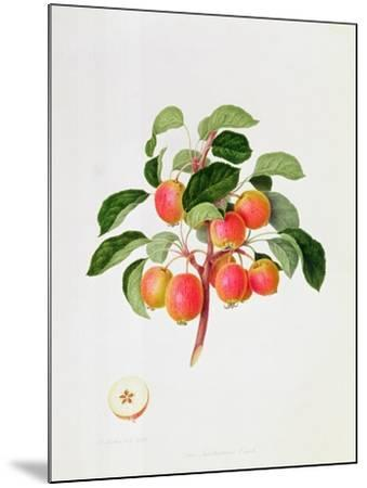 The Tartarian Crab Apple, 1819-William Hooker-Mounted Giclee Print