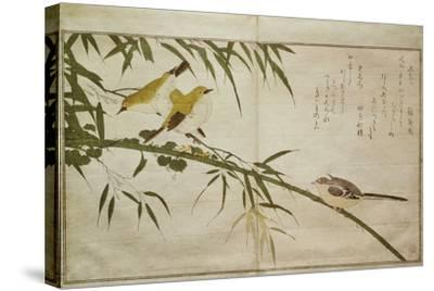 P.332-1946 Vol.2 F.6 Long-Tailed Tit and Three White Eyes, from an Album 'Birds Compared in…-Kitagawa Utamaro-Stretched Canvas Print