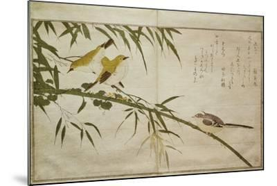 P.332-1946 Vol.2 F.6 Long-Tailed Tit and Three White Eyes, from an Album 'Birds Compared in…-Kitagawa Utamaro-Mounted Giclee Print
