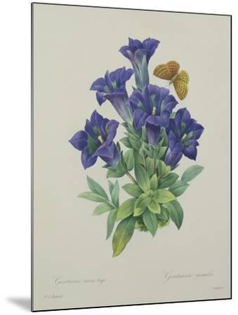 Gentiana Acaulis (Trumpet Gentian), Engraved by Langlois, from 'Choix Des Plus Belles Fleurs', 1827-Pierre-Joseph Redout?-Mounted Giclee Print