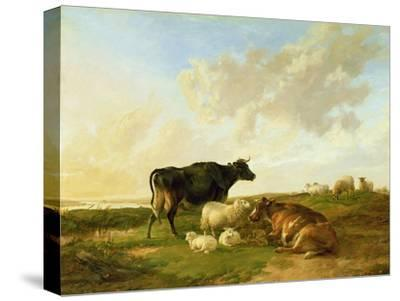 Landscape with Cows and Sheep, 1850-Thomas Sidney Cooper-Stretched Canvas Print