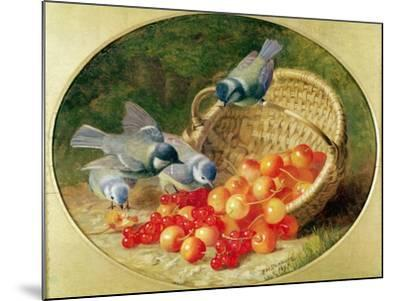 Bluetits Pecking at Cherries, 1897-Eloise Harriet Stannard-Mounted Giclee Print