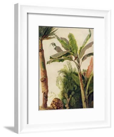 Banana Tree, C.1865-Frederic Edwin Church-Framed Giclee Print
